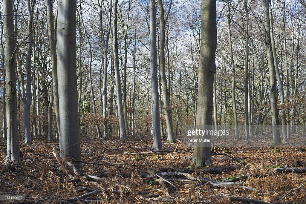 Woodland in winter sunlight