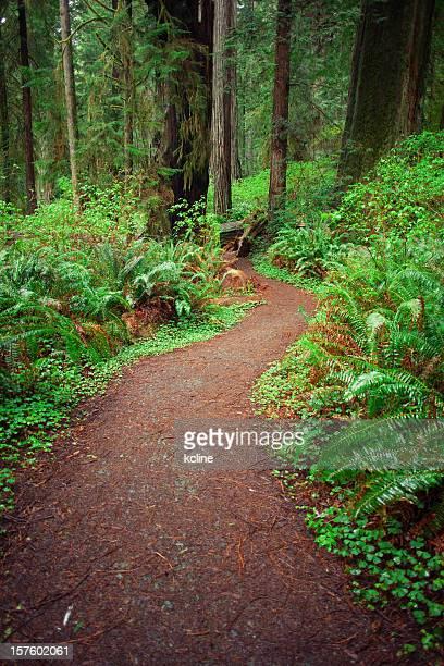 Woodland percorso di