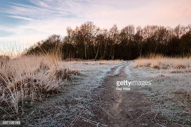 Woodland path sunrise
