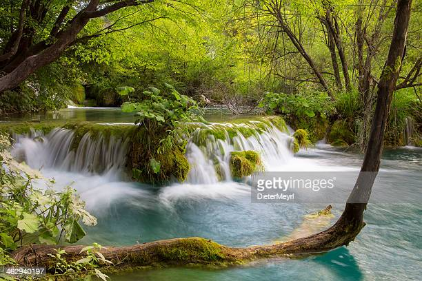 Woodland stream  in Plitvice Lakes National Park (Croatia)