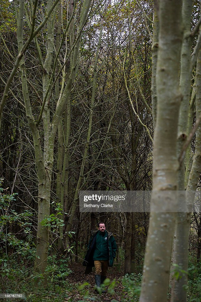 A woodland Trust worker inspects ash trees for signs of Dieback Disease in Pound Farm Woodland on November 8, 2012 near Ipswich, United Kingdom. The Ash Dieback outbreak has the potential to devastate the UK's population of 80 million ash trees. The first confirmed case in the UK was in March 2012, and since then, dieback has been confirmed at a further 82 sites, with woodlands in Norfolk, Suffolk, Kent and Essex among the worst affected and has now spread to Scotland. Dieback is caused by a fungus Chalara Fraxinea and was first recorded in Eastern Europe in 1992, spreading over two decades to infect most of the continent.