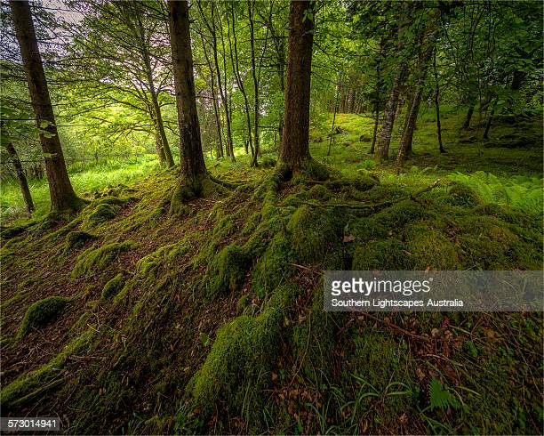Woodlands along the shores of loch Awe