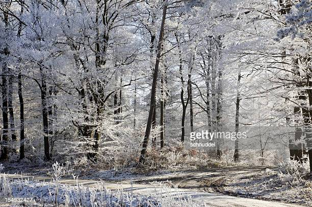 Woodlandscapes with hoarfrost