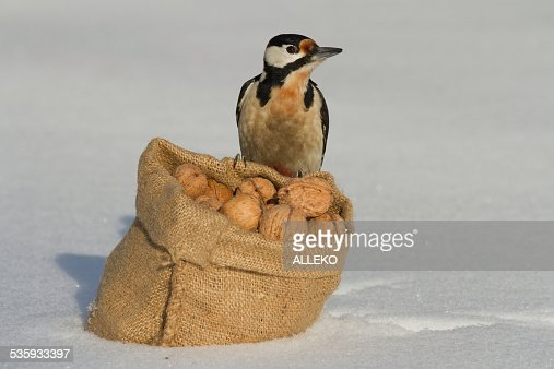 Woodpecker sitting on a bag of nuts white snow. winter : Stock Photo