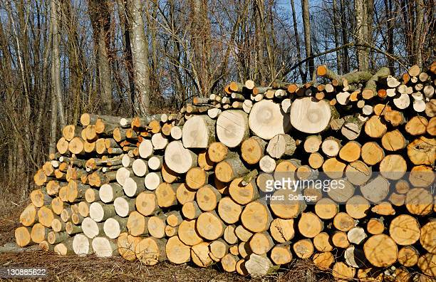 Woodpile in a forest, Alder (Alnus) and Ash (Fraxinus) logs