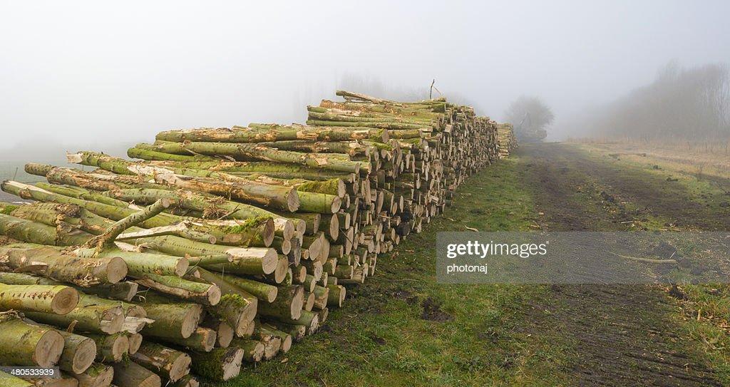薪の山の近くには、霧の漂う冬森 : ストックフォト