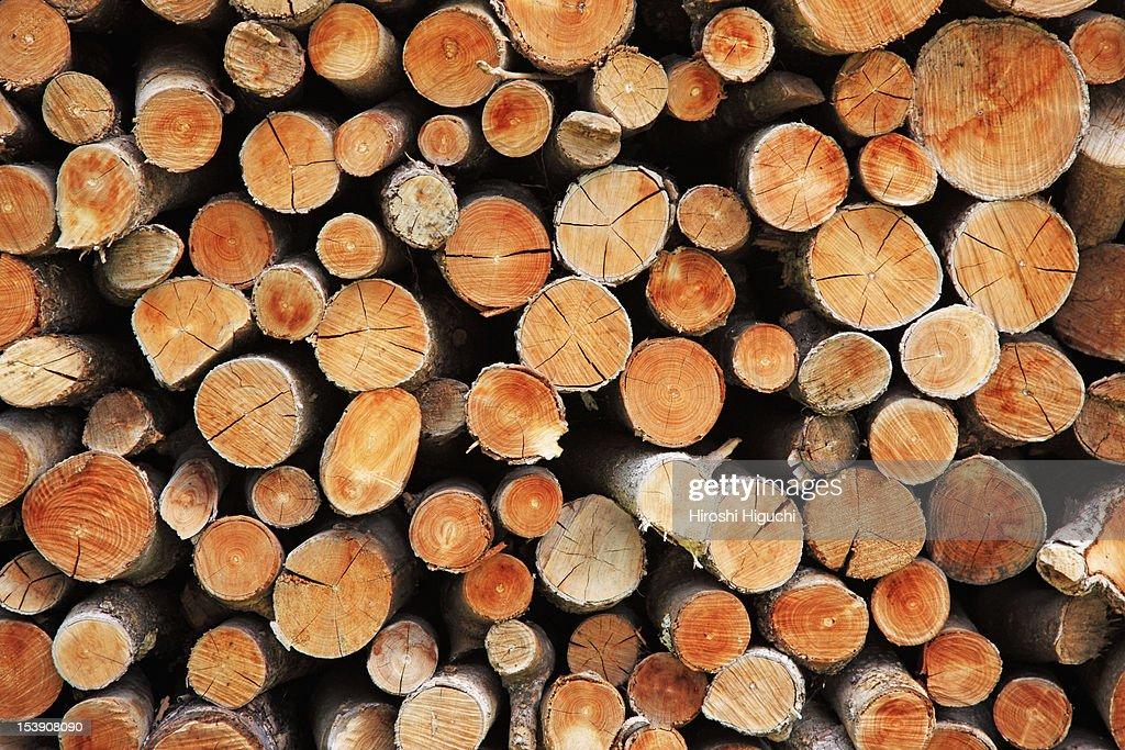 Woodpile : Stock Photo