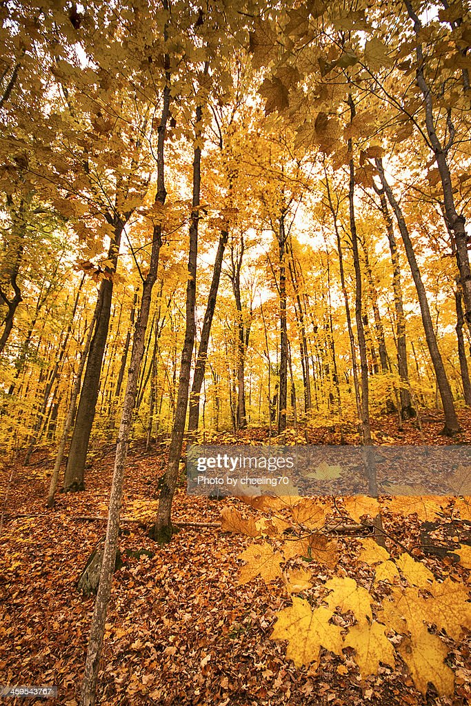 Woods in falls : Stock Photo