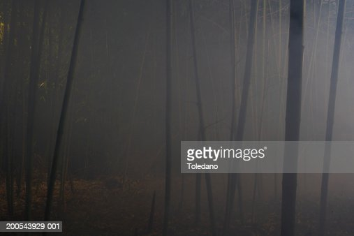 Woods in fog : Stock Photo
