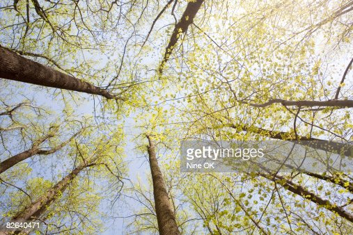 Woods in Springtime : Stock Photo
