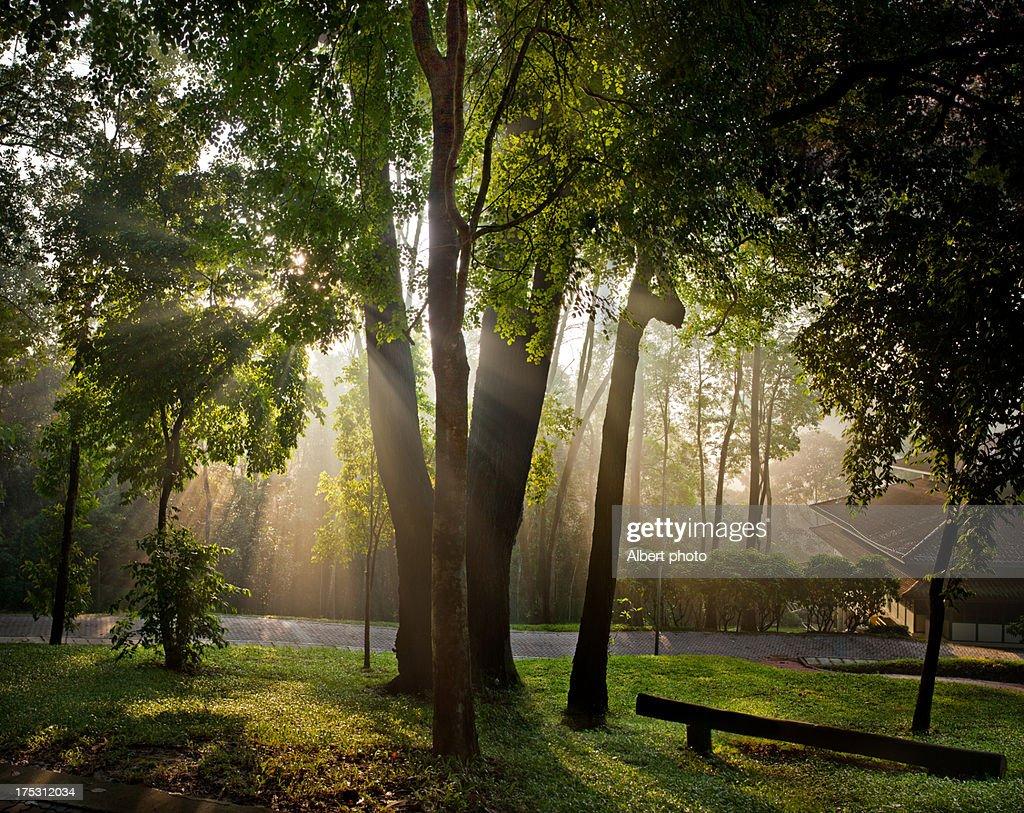 woods, tree, nature
