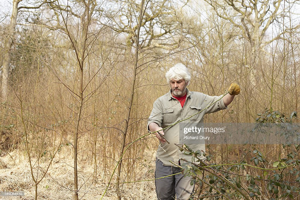 Woodsman clearing brambles from saplings