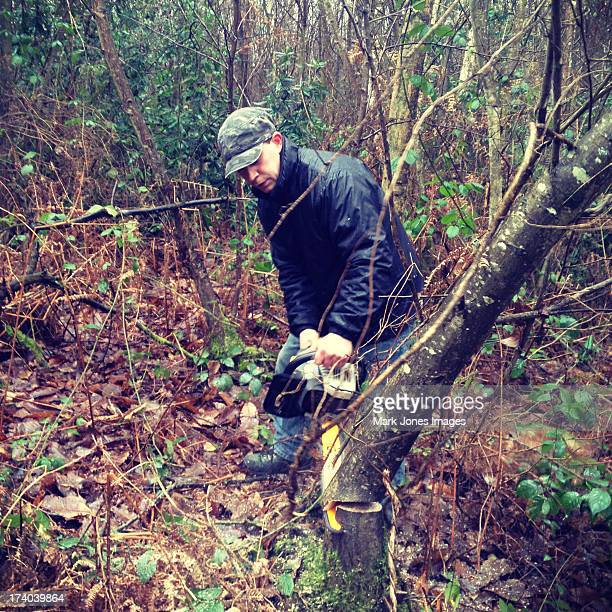 woodsman with chainsaw cutting down a tree