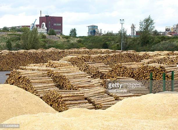 Industria forestale Lavorazione del legno nel cortile di legname