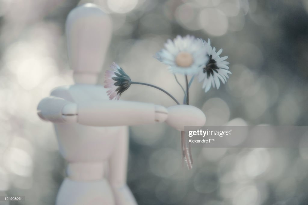 Woody offering daisy bouquet : Stock Photo
