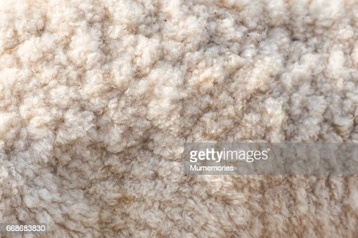 Wool soft sheep surface close up : Stock Photo