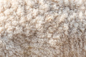 Wool soft sheep surface close up texture