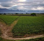 Worcester Vineyard