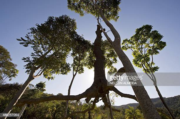 A work by Italian artist Giuseppe Penone ao is displayed at the Inhotim Centre for Contemporary Art in Brumadinho some 60 km from Belo Horizonte...
