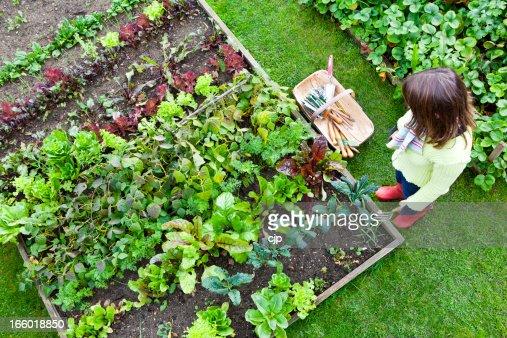 Work in a Vegetable Garden