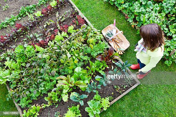 Work in a Vegetable Garden
