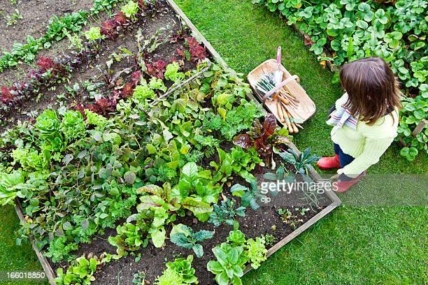 Travail dans un jardin potager
