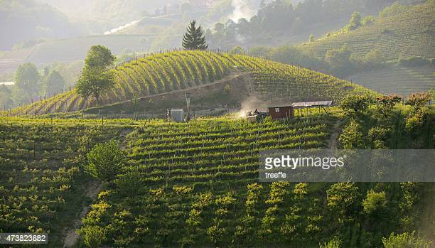 Work in the Vineyards in Langhe - Roero at sunset