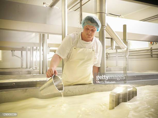 Worker adding rennet to milk for cheese-making