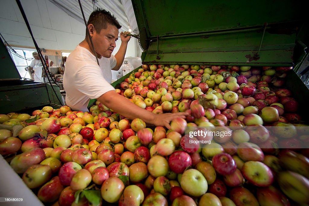 Worker Angel Santiago runs apples into a conveyor system while preparing to make cider at Breezy Hill Orchard in Staatsburg, New York, U.S., on Thursday, Sept. 12, 2013. With apple harvest now officially underway across the state of New York, nearly 700 apple growers are expected to pick about 32 million bushels by the time harvest concludes in November, according to New York Apple Association (NYAA) reports. Photographer: Craig Warga/Bloomberg via Getty Images