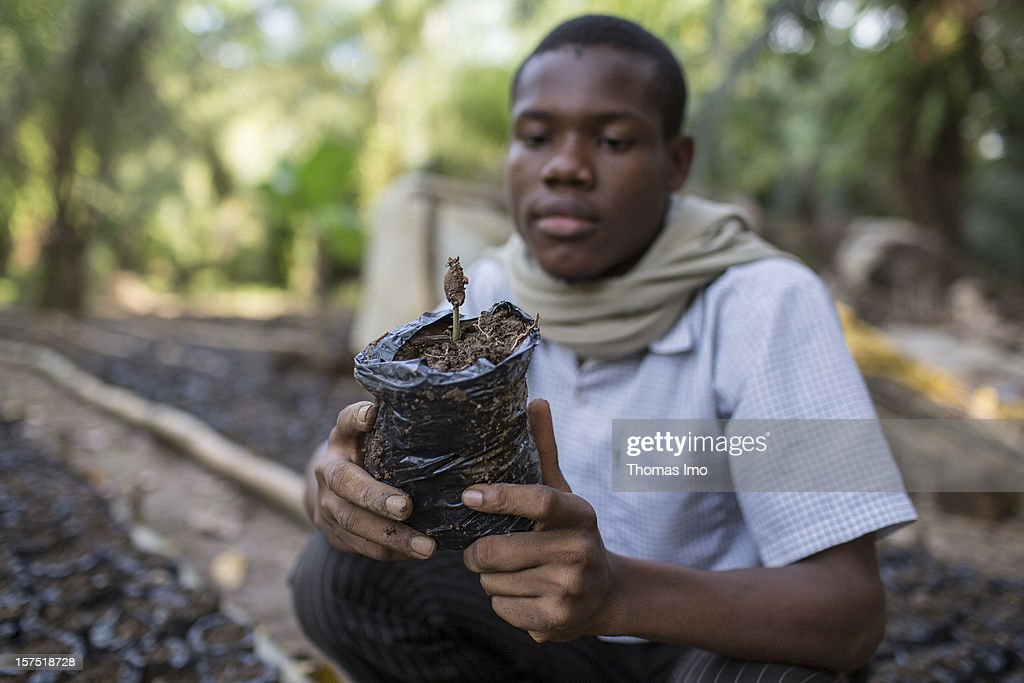 A worker at a Mondoni cocoa plantation holding a cocoa tree seedling on October 30, 2012 in Mondoni, Cameroon.