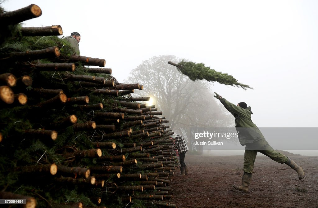 We're Gonna Need a Bigger Truck: Christmas Tree Farmers Bring in Holiday Haul