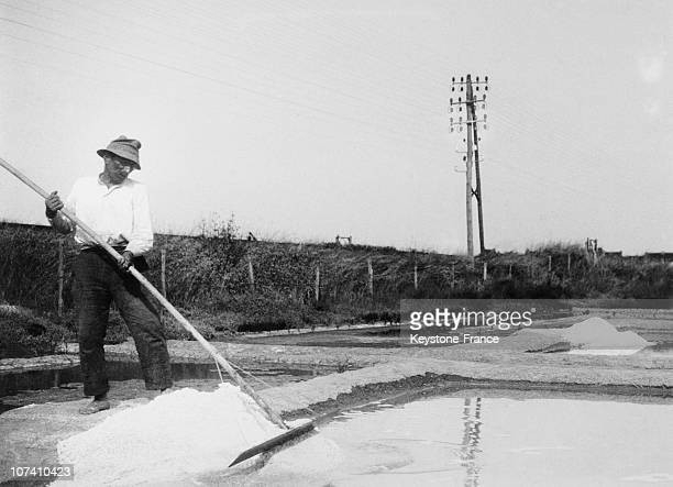 Worker At The Salt Marshes Of Guerande In June 1936