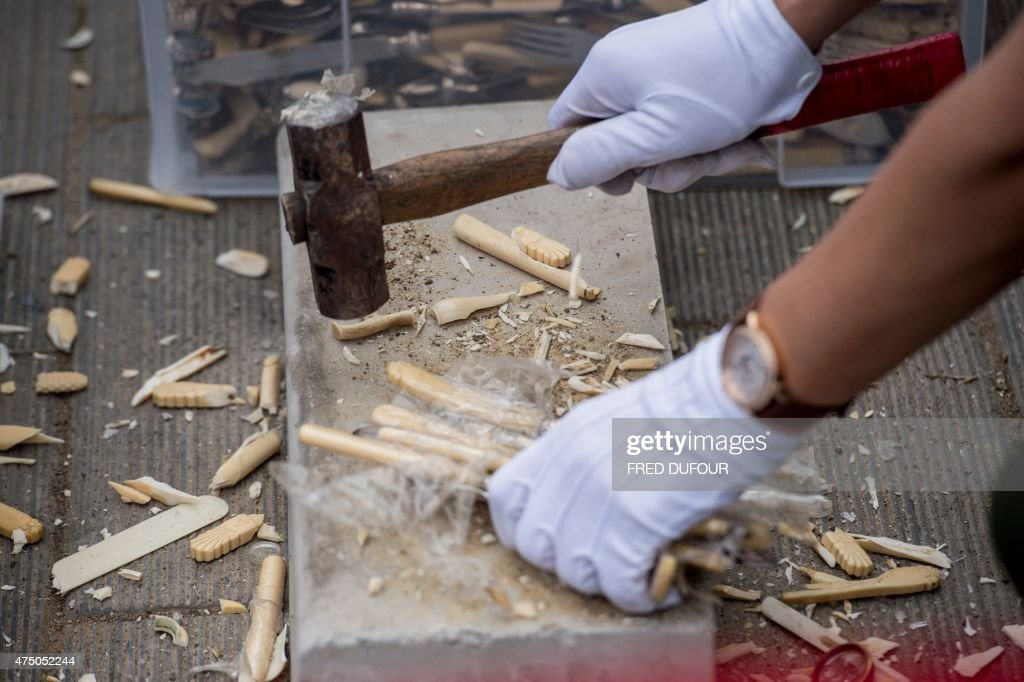 A worker breaks ivory knives in Beijing on May 29, 2015. China destroyed more than six hundred kilograms of ivory in front of media and diplomats, as it seeks to shed its image as a global trading hub for illegal elephant tusks. AFP PHOTO / FRED DUFOUR