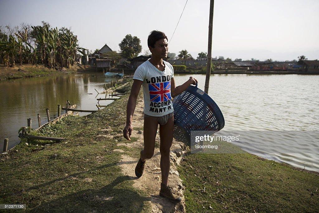 Operations at a fish farm as burmese await presidential for Taylor fish farm
