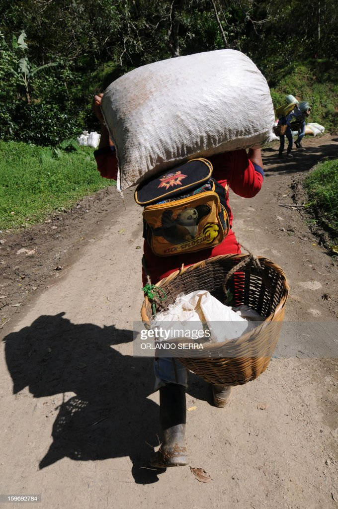 A worker carries a sack of coffee beans during harvest, in the department El Paraiso, 110 kms east of Tegucigalpa, on Januray 17, 2013. Central America, one of main producers of the best Arabica Coffee, is analyzing to take measures to combat the plague already threatening more than one third of the bean crop, one of the region's major export item. AFP PHOTO/Orlando SIERRA