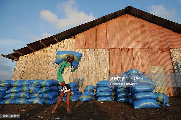 A worker carries a sack of salt crystals during harvest on September 17 2015 in Sidoarjo Java Indonesia Indonesia salt harvesters have seen an...