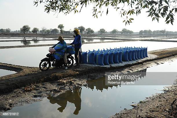 A worker carries sacks of salt crystals during harvest on September 17 2015 in Sidoarjo Java Indonesia Indonesia salt harvesters have seen an...