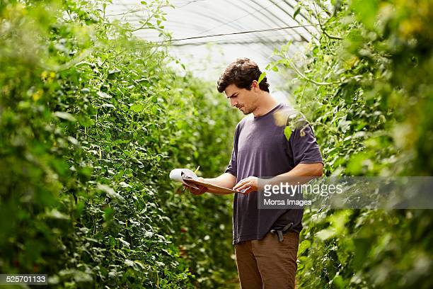 Worker checking documents in greenhouse