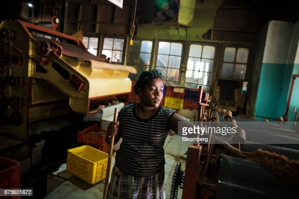 A worker checks a machine while sweeping the floor of the factory of the Geragama Tea Estate operated by Pussellawa Plantations Ltd in Pilimathalawa...