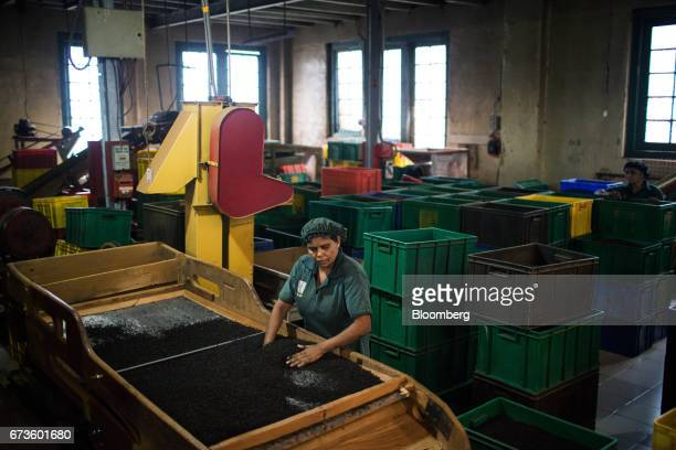 A worker checks tea leaves on a machine where tea is separated by size and color at the factory of the Geragama Tea Estate operated by Pussellawa...