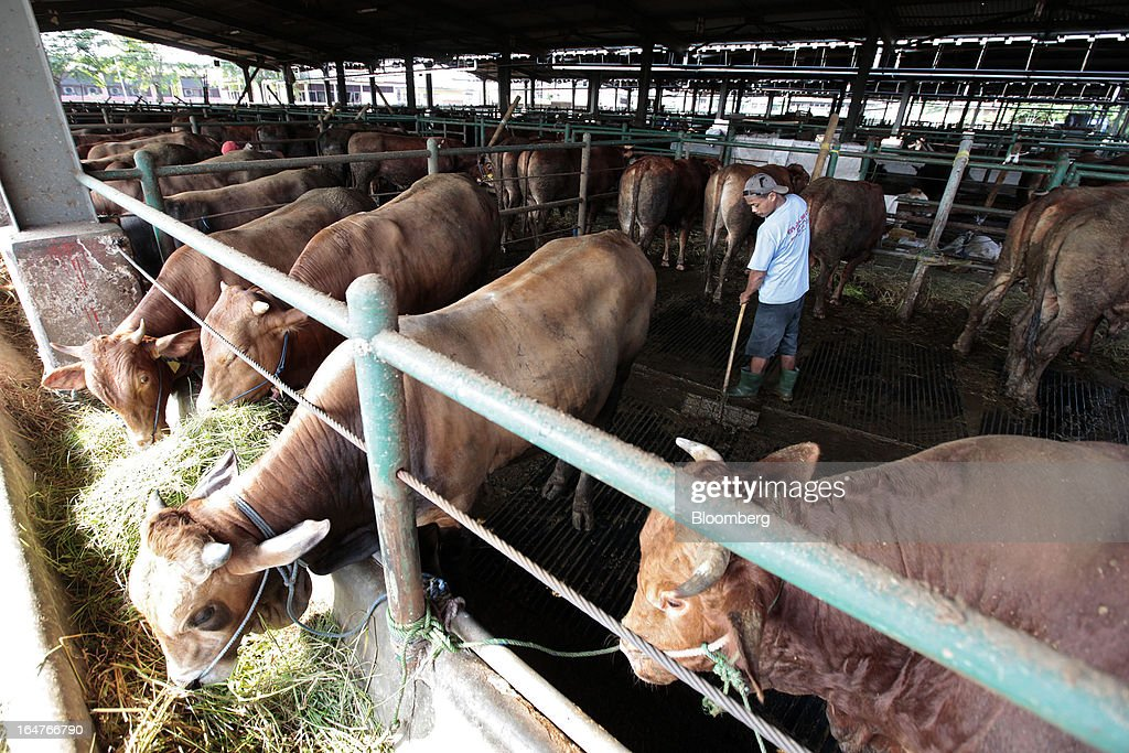 A worker cleans around cattle during feeding at a slaughterhouse in Cakung, Indonesia, on Wednesday, March 27, 2013. Indonesia blocked a U.S. request for World Trade Organization judges to probe Indonesian curbs on imports of horticultural goods, animals and animal products ranging from beef and vegetables to fruits and dried flowers. Photographer: Dimas Ardian/Bloomberg via Getty Images