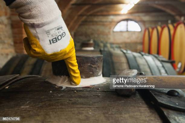 A worker closes the plug of a barrel with Barolo to check the quality on October 17 2017 in the Barolo region Italy Because of the high summer...