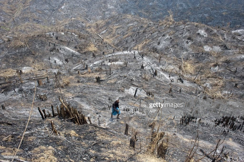 A worker collects burnt teak tree in Bago region on April 5, 2014. Myanmar accounts for nearly one third of the world's total teak production.