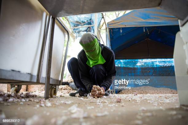 A worker collects garlic skins from the ground at a Nithi Foods Co factory in the San Pa Tong district of Chiang Mai Thailand on Tuesday May 23 2017...