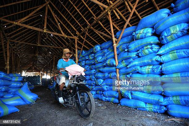 A worker collects sacks of salt crystals during harvest on September 17 2015 in Sidoarjo Java Indonesia Indonesia salt harvesters have seen an...