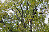 unknown man worker climber cuts off the tree dry branches by chainsaw