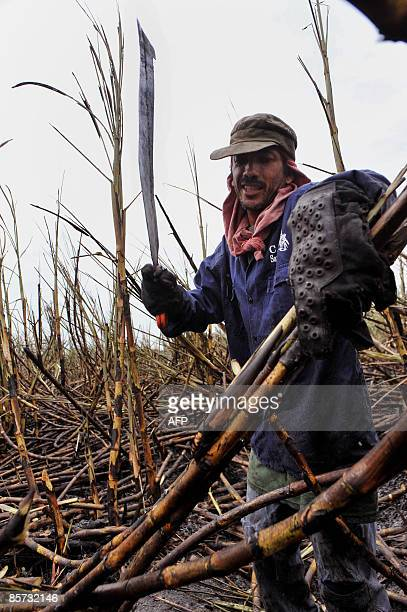 A worker cuts sugar cane on March 18 2009 in Candelaria department of Valle del Cauca Colombia The Mayaguez sugar refinery produces 7500 tons of cane...