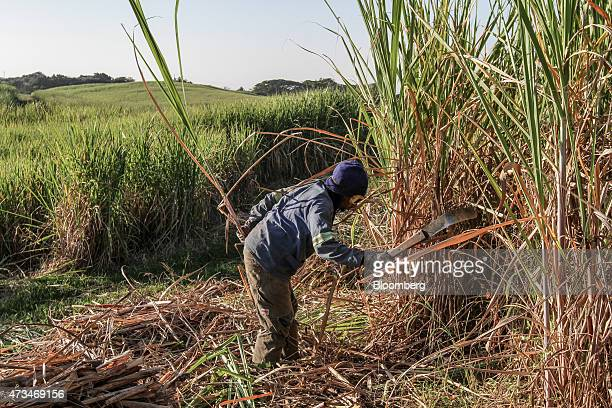 A worker cuts sugarcane plants during the harvest on farmland operated by Illovo Sugar Ltd in Sezela South Africa on Thursday May 14 2015 Illovo...