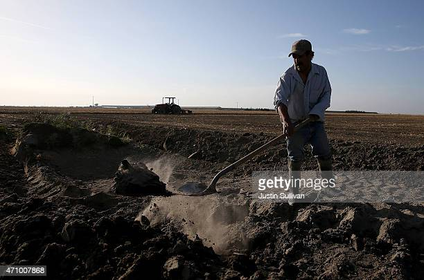 A worker digs a ditch next to a fallow field on April 24 2015 in Hanford California As California enters its fourth year of severe drought farmers in...
