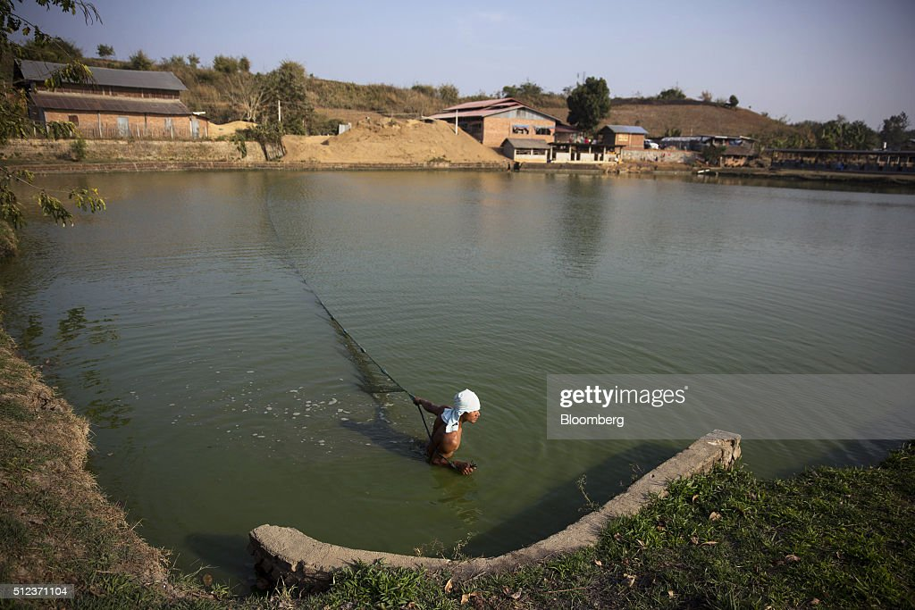 Operations at a fish farm as burmese await presidential for Farm pond fish